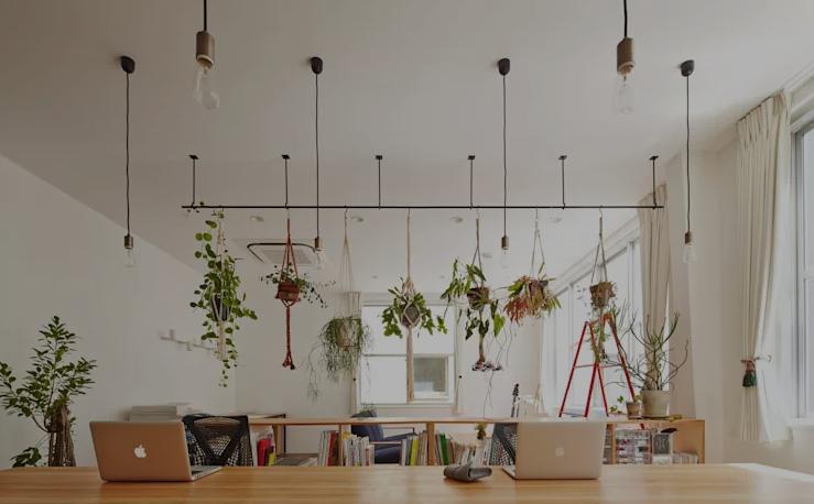 mẹo giúp tủ quần áo luôn thơm mỗi ngày bằng cách trồng cây trong phòng