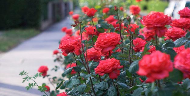 Những cây hoa đẹp đón tài lộc trồng vườn nhà thêm tươi mới