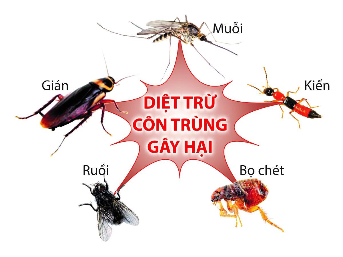 Những mẹo diệt côn trùng an toàn hiệu quả không cần dùng hóa chất