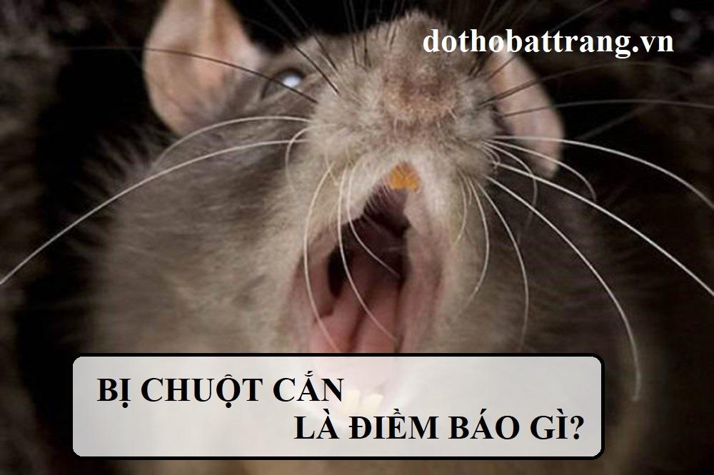 Bị chuột cắn là điềm báo gì