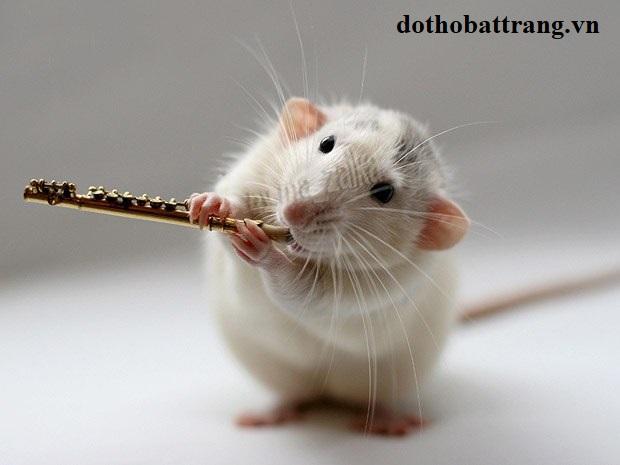 Bị chuột cắn là điềm báo gì 1
