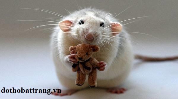 Bị chuột cắn là điềm báo gì 3