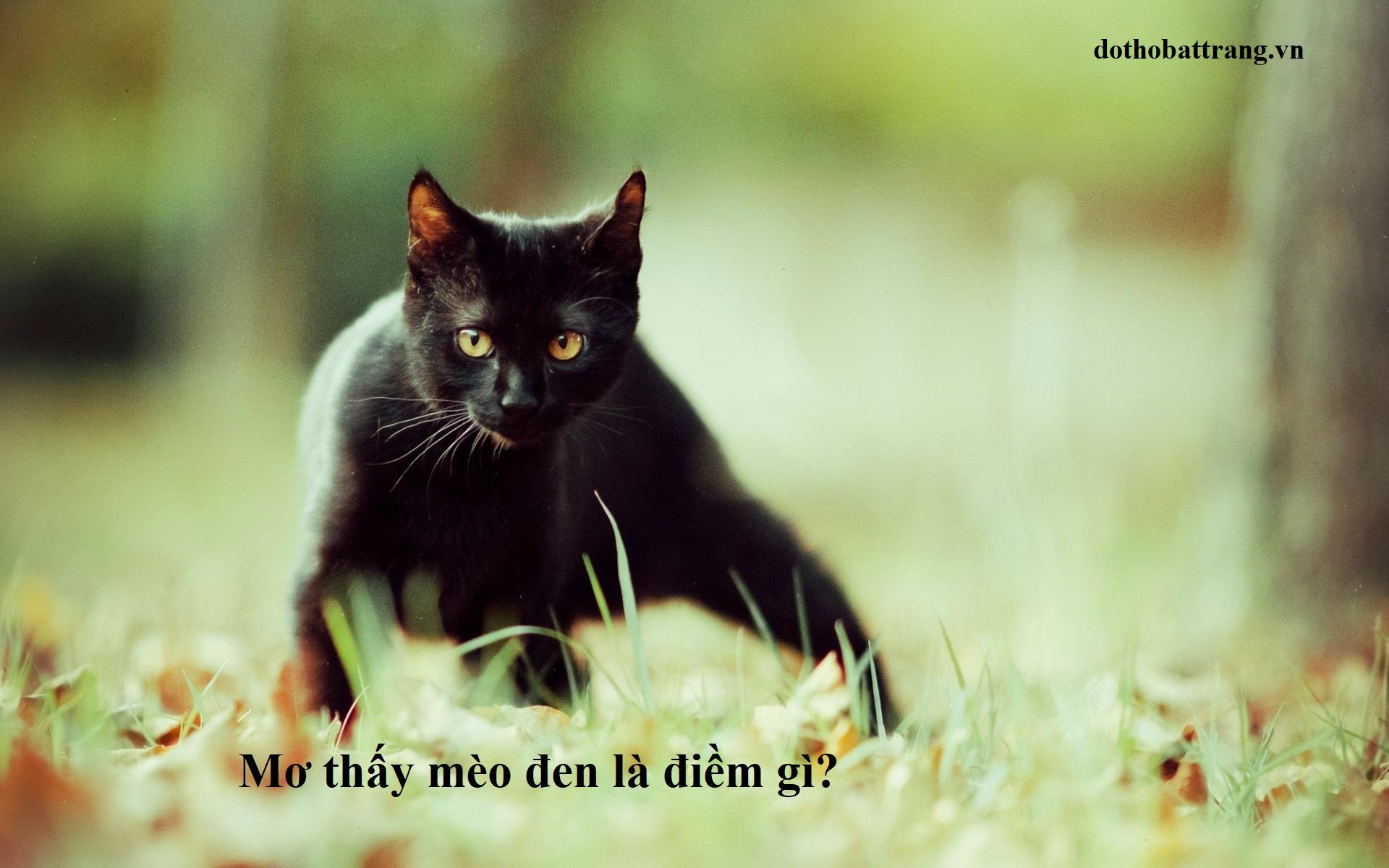 Mơ thấy mèo đen là điềm gì