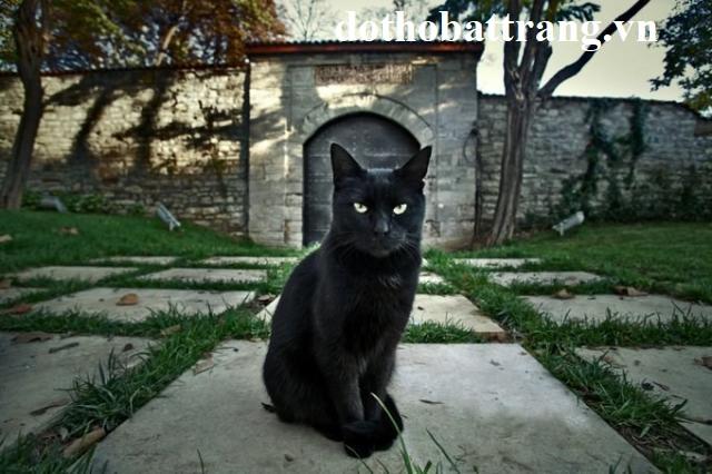 Mơ thấy mèo đen là điềm gì 3