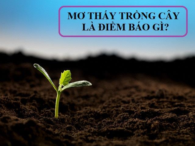 Mơ thấy trồng cây là điềm báo gì