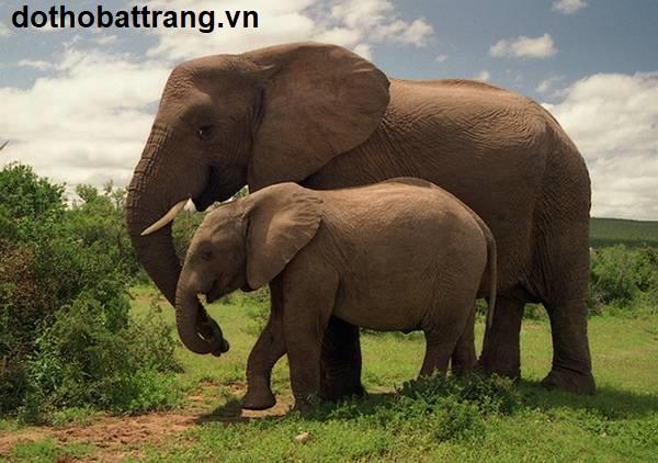 Nằm mơ thấy con voi là điềm báo gì 1