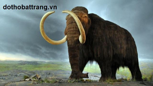 Nằm mơ thấy con voi là điềm báo gì 2