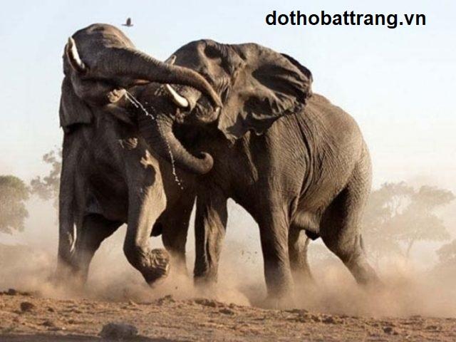 Nằm mơ thấy con voi là điềm báo gì 3