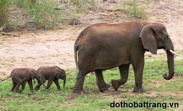 Nằm mơ thấy con voi là điềm báo gì 4