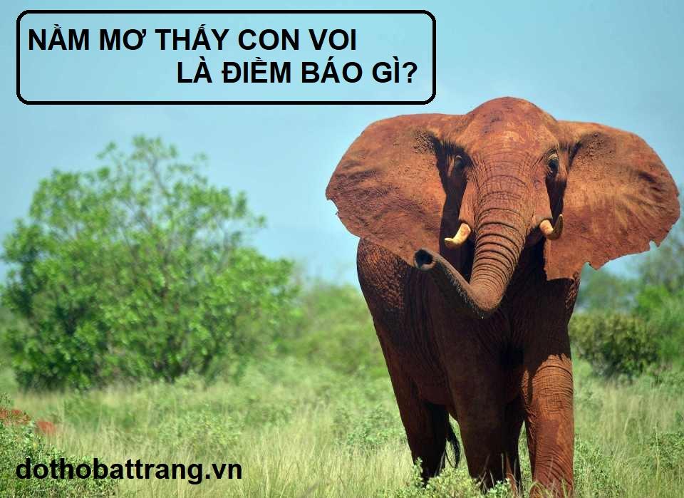 Nằm mơ thấy con voi là điềm báo gì