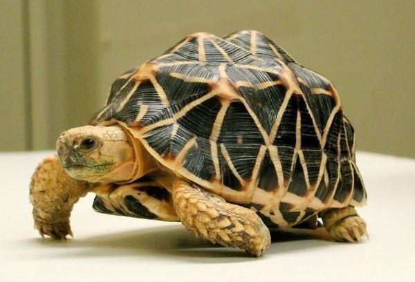 [giải đáp] rùa bò vào nhà là điềm báo gì ? hên hay xui ?