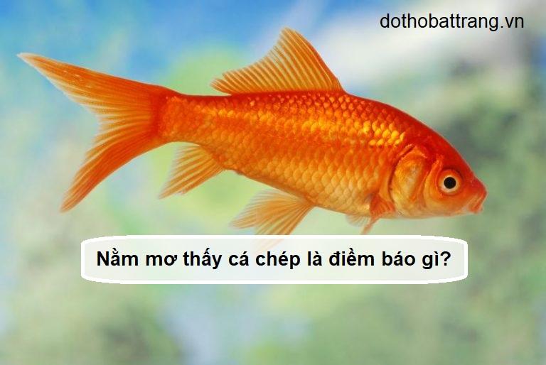 Nằm mơ thấy cá chép là điềm báo gì