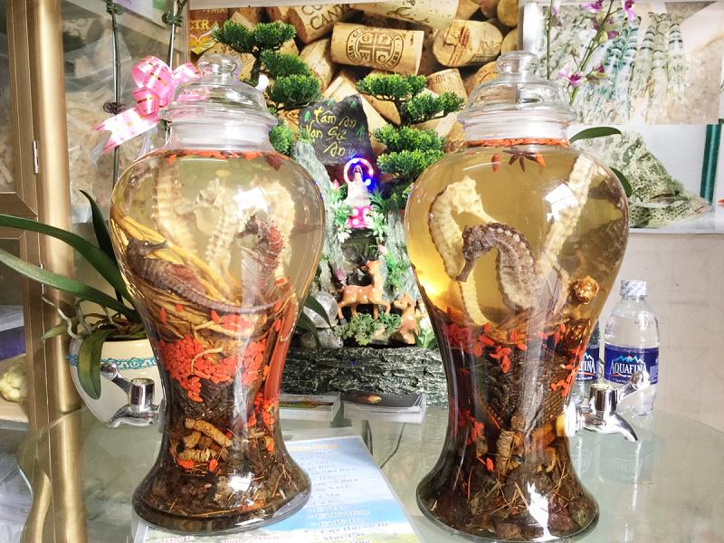 bình ngâm rượu cá ngựa giá rẻ tại Bình Tân