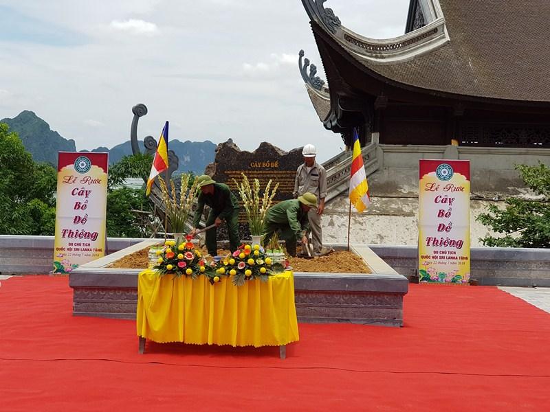 lễ rước cây bồ đề thiên, cây bồ đề 2500 tuổi được trồng tại chù Tam Chúc 3 Sao, bồ đề sirilanka tặng Việt Nam.